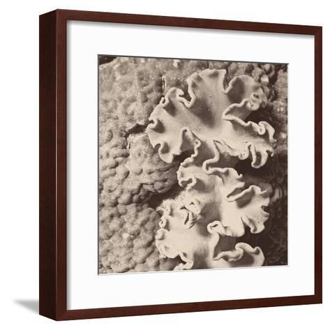 Sepia Barrier Reef Coral IV-Kathy Mansfield-Framed Art Print