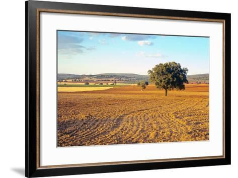 Castilla-La Mancha, Trees in Ploughed Agricultural Landscape Near Urda-Marcel Malherbe-Framed Art Print