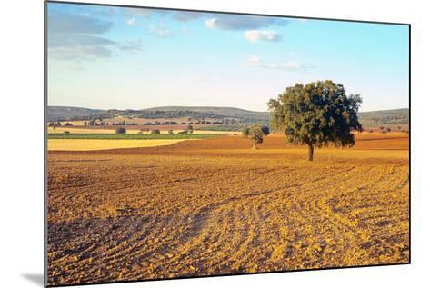 Castilla-La Mancha, Trees in Ploughed Agricultural Landscape Near Urda-Marcel Malherbe-Mounted Photographic Print