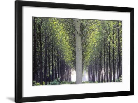Flevoland, Man-Made Forest-Marcel Malherbe-Framed Art Print