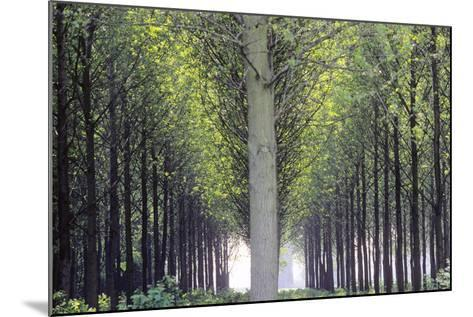 Flevoland, Man-Made Forest-Marcel Malherbe-Mounted Photographic Print