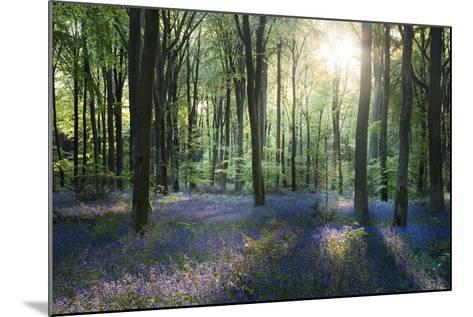 Sunlight Through Trees in Bluebell Woods, Micheldever, Hampshire, England-David Clapp-Mounted Photographic Print