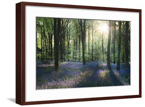 Sunlight Through Trees in Bluebell Woods, Micheldever, Hampshire, England-David Clapp-Framed Art Print