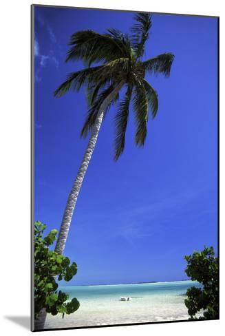 Palm Tree on a White Sand Beach, Bahamas-Natalie Tepper-Mounted Photographic Print