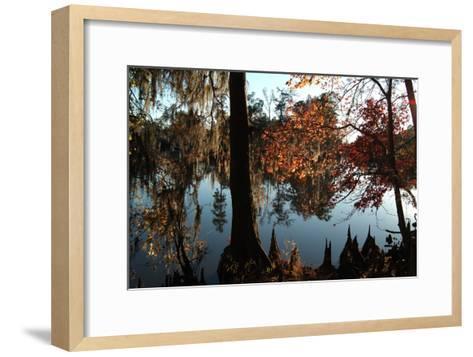 Cypress (Taxodium) Trees and 'Knees' in Autumn, Sam Houston Jones State Park, Louisiana-Natalie Tepper-Framed Art Print