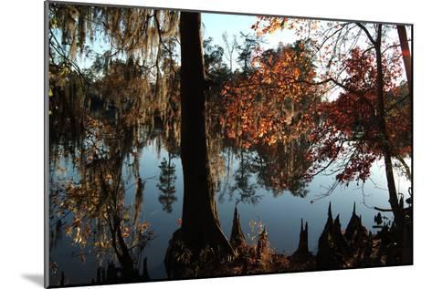 Cypress (Taxodium) Trees and 'Knees' in Autumn, Sam Houston Jones State Park, Louisiana-Natalie Tepper-Mounted Photographic Print