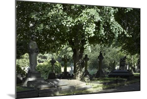 Trees and Graves at Brompton Cemetery, Kensington, London-Richard Bryant-Mounted Photographic Print