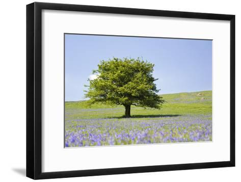 Lone Tree and Mauve Spring Wildflowers at Holwell Lawn, Dartmoor, Devon England-David Clapp-Framed Art Print