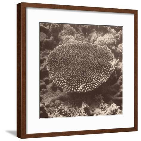 Sepia Barrier Reef Coral II-Kathy Mansfield-Framed Art Print