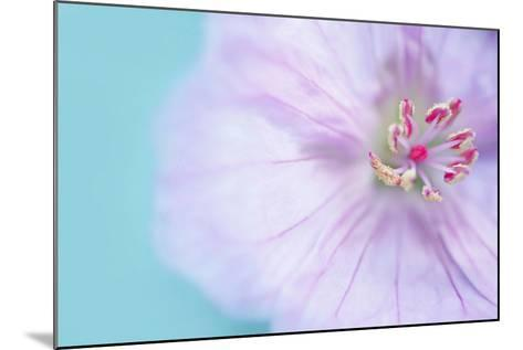 The Heart of a Flower-Sarah Gardner-Mounted Photographic Print