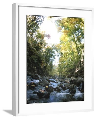 Rapids in Sunny Forest--Framed Art Print