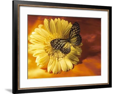 Black and Yellow Butterfly on Yellow Flower--Framed Art Print
