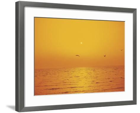 Golden Sunset with Seagulls Over an Ocean--Framed Art Print