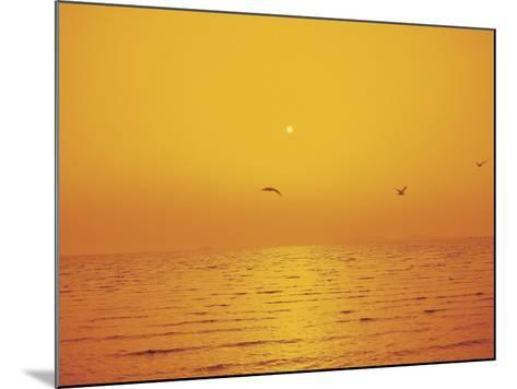 Golden Sunset with Seagulls Over an Ocean--Mounted Photographic Print