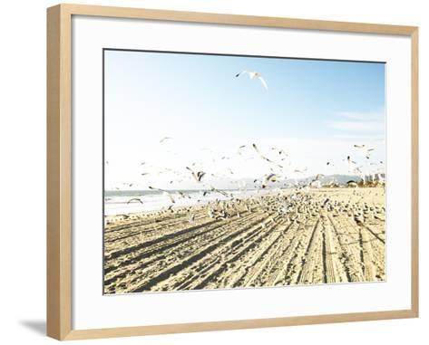 Flock of Seagulls Flying Across Water and Sand--Framed Art Print
