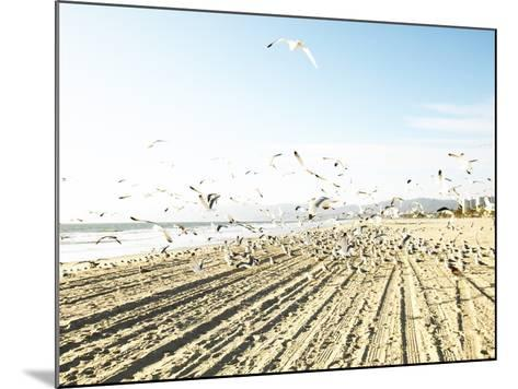 Flock of Seagulls Flying Across Water and Sand--Mounted Photographic Print