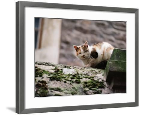 Cat Crouch on Rocky Moss-Covered Surface--Framed Art Print