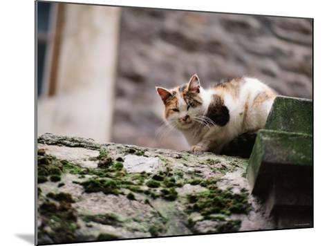 Cat Crouch on Rocky Moss-Covered Surface--Mounted Photographic Print