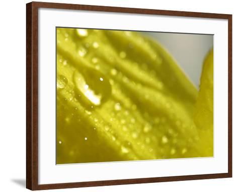 Water Droplets on Flower Petal--Framed Art Print