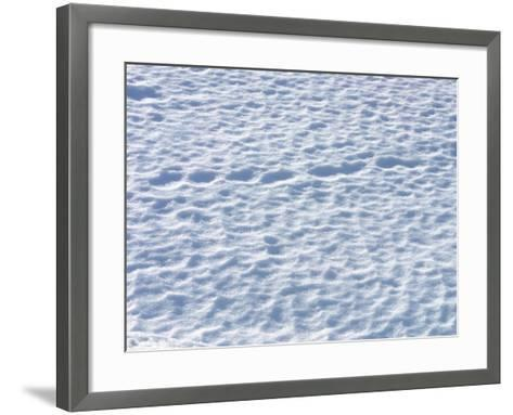Footprints in the Snow--Framed Art Print
