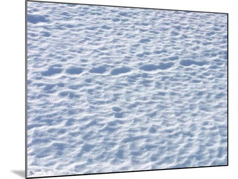 Footprints in the Snow--Mounted Photographic Print