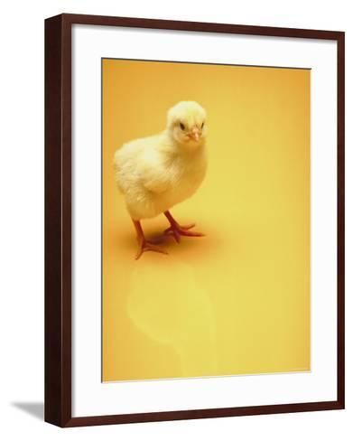 Adorable Baby Chick Standing on Yellow Background--Framed Art Print