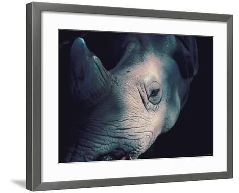 Close Up of Wrinkled Rhinoceros Head in Nature--Framed Art Print