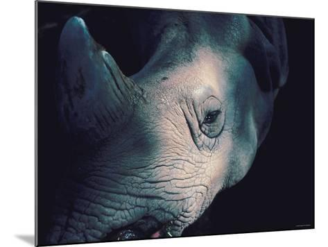 Close Up of Wrinkled Rhinoceros Head in Nature--Mounted Photographic Print