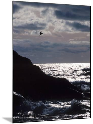 Silhouette of Seagull Flying Over Scenic Rocks and Water--Mounted Photographic Print