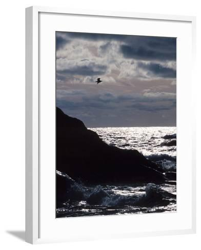Silhouette of Seagull Flying Over Scenic Rocks and Water--Framed Art Print