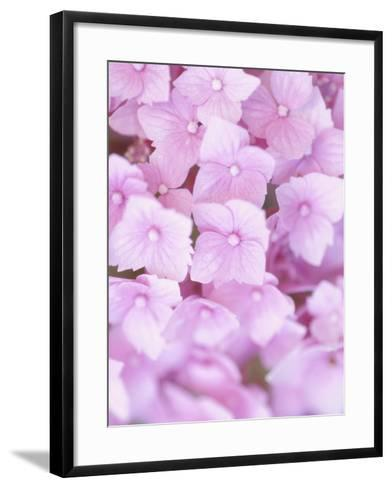 Close-up of Blooming Pink Blossoms--Framed Art Print