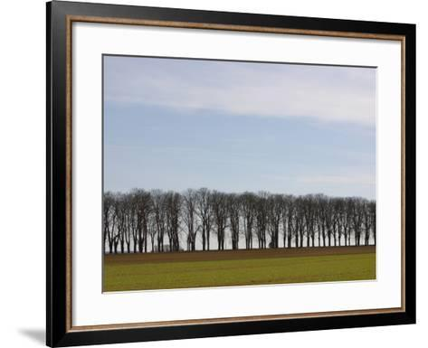 An Expanse of Blue Sky Above a Row of Bare Trees and Green Grass--Framed Art Print