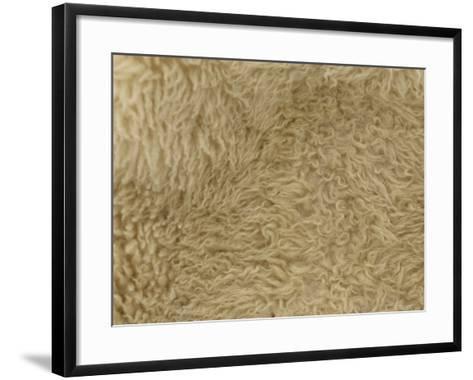 Close-up of Soft Furry Woolen Texture--Framed Art Print