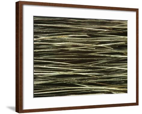 Close-up of Dark Paintbrush Bristles--Framed Art Print