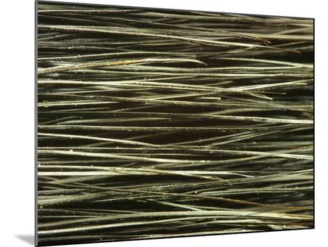 Close-up of Dark Paintbrush Bristles--Mounted Photographic Print