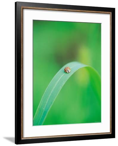 Ladybug Sitting in the Middle of a Leaf--Framed Art Print