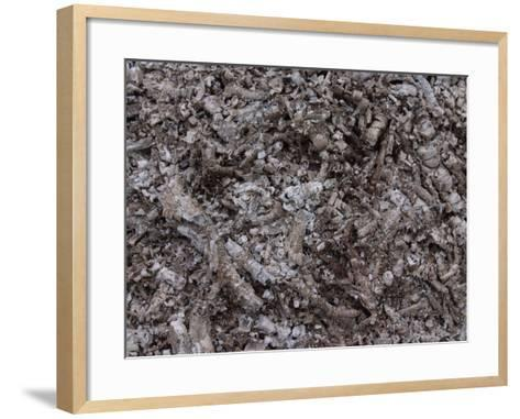 Close-up of a Pile of Cool Gray Ashes--Framed Art Print