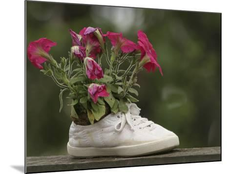 A White Shoe Used as a Flower Pot with Pink Blossoms--Mounted Photographic Print