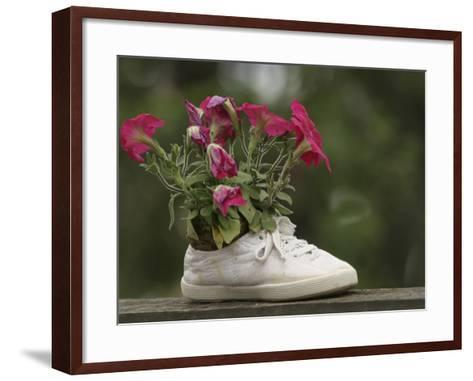 A White Shoe Used as a Flower Pot with Pink Blossoms--Framed Art Print