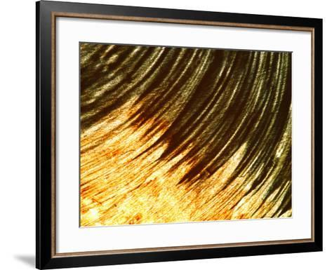 Close-up of Colorful Paint in a Circular Pattern--Framed Art Print