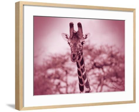 Giraffe in the Wild--Framed Art Print