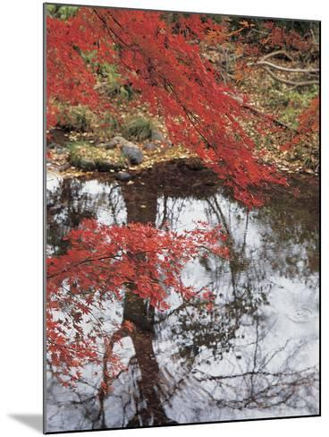 Bright Red Fall Leaves with Reflection in Water--Mounted Photographic Print