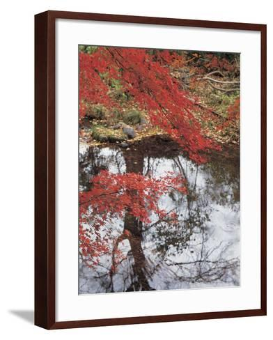 Bright Red Fall Leaves with Reflection in Water--Framed Art Print