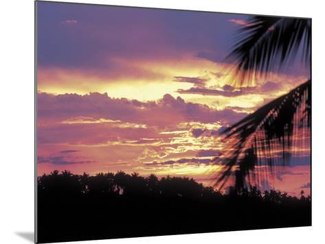 Gold and Pink Sunset with Silhouette of Palm Tree--Mounted Photographic Print