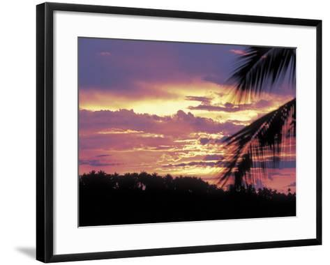Gold and Pink Sunset with Silhouette of Palm Tree--Framed Art Print