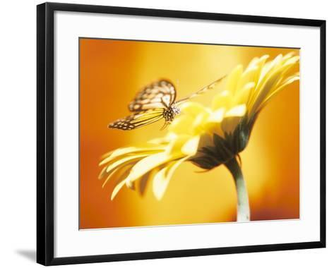 Beautiful Monarch Butterfly on Blooming Daisy--Framed Art Print