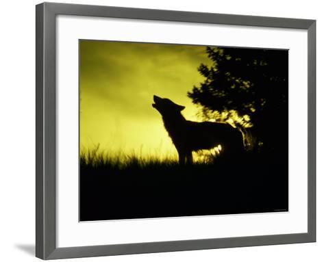 Silhouette of Gray Wolf Standing in Field While Howling--Framed Art Print