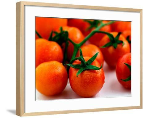 Display of Delicious and Beautiful Red Cherry Tomatoes on Vine--Framed Art Print