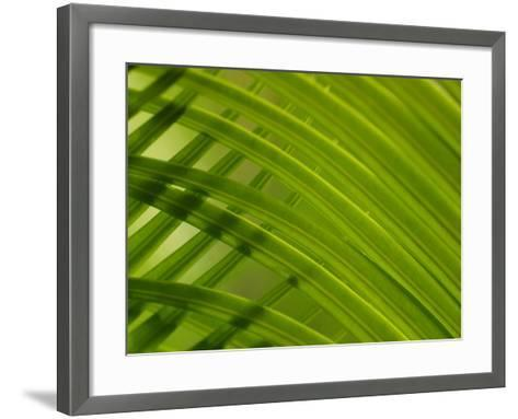 Close-Up of Palm Leaves Creating a Diagonal Background in Cameroon, Africa--Framed Art Print
