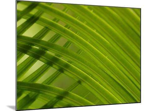 Close-Up of Palm Leaves Creating a Diagonal Background in Cameroon, Africa--Mounted Photographic Print